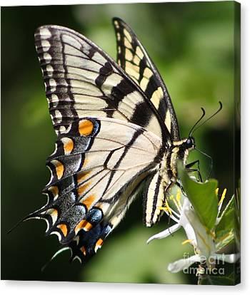 Polychromatic Beauty Canvas Print