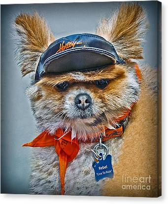 Pomeranian Biker Dog Canvas Print by Gary Keesler
