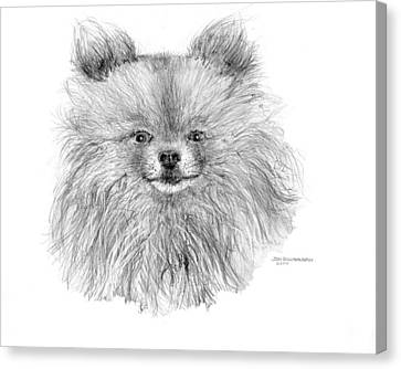 Canvas Print featuring the drawing Pomeranian by Jim Hubbard