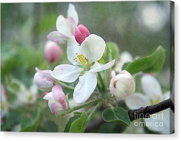 Pomme D Api 01 - S01bt01c Canvas Print by Variance Collections
