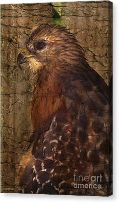 Ponce Inlet Hawk Canvas Print by Deborah Benoit