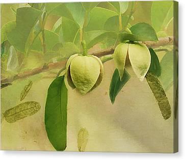 Pond Apple Canvas Print