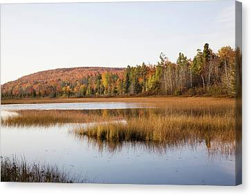 Pond In A Forest, Alger County, Upper Canvas Print by Panoramic Images