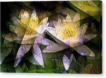 Pond Lily 24 Canvas Print by Pamela Cooper