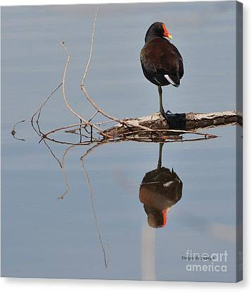 Canvas Print featuring the photograph Pond Reflection by Debby Pueschel