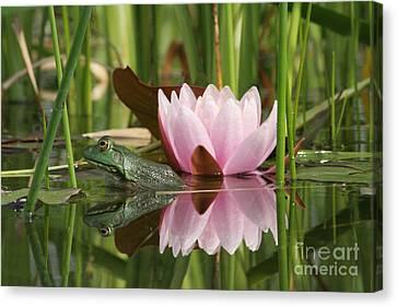 Pond Reflections Canvas Print