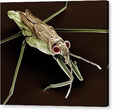 Pond Skater Canvas Print by Clouds Hill Imaging Ltd
