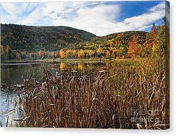 Pond With Autumn Foliage  Canvas Print by George Oze