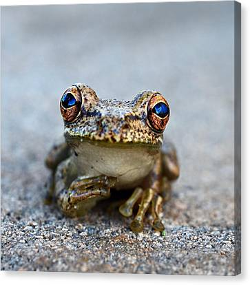 Pondering Frog Canvas Print by Laura Fasulo