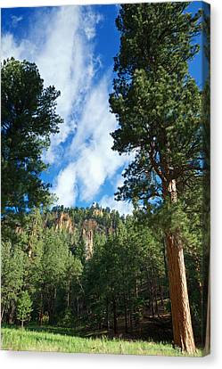 Ponderosa And Cliffs In The Jemez Mountains New Mexico Canvas Print by Mary Lee Dereske