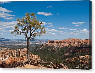 Ponderosa Pine Tree Clinging To Life On Canyon Rim Canvas Print by Jeff Goulden