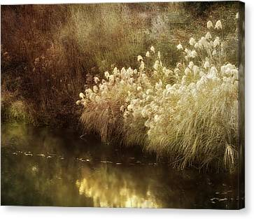Pond's Edge Canvas Print by Julie Palencia