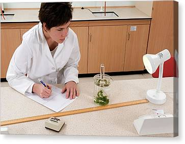 Pondweed Oxygen Production Experiment Canvas Print