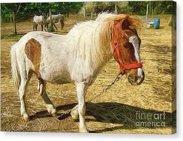 Stone Pony Canvas Print - Ponies On The Farm by Odon Czintos