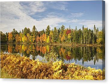 Pontook Reservoir - Dummer New Hampshire Canvas Print