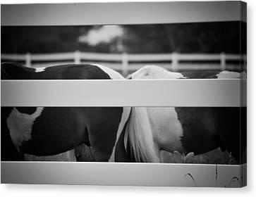 Pony Farm 2011 Canvas Print