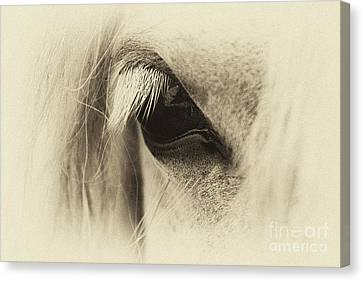 Pony In Sepia  Canvas Print