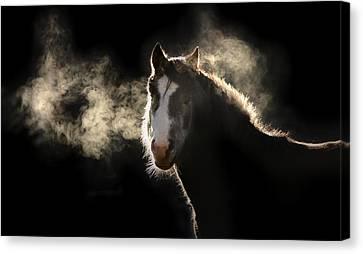 Pony Canvas Print by Marc Huebner