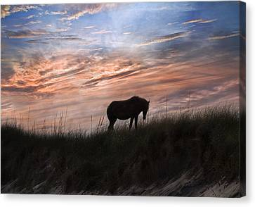 Feral Canvas Print - Pony On The Dunes by Betsy Knapp