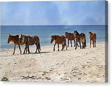 Feral Canvas Print - Pony Procession  by Betsy Knapp