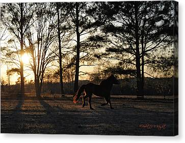 Pony's Evening Pasture Trot Canvas Print by Paulette B Wright