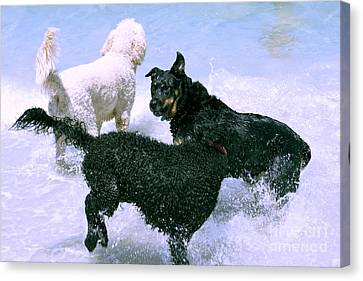 Pooch Play Canvas Print