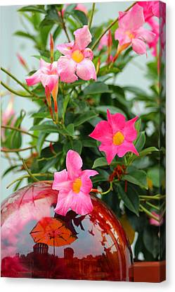 Pool Side Flowers Canvas Print by Lorna Rogers Photography