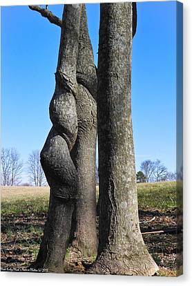 Canvas Print featuring the photograph Poor Twisted Tree by Nick Kirby
