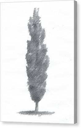 Poplar Drawing Number One Canvas Print by Alan Daysh