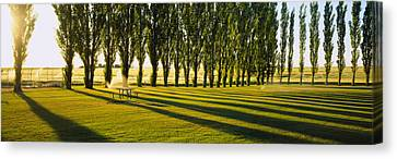 Poplar Trees Near A Wheat Field, Twin Canvas Print by Panoramic Images
