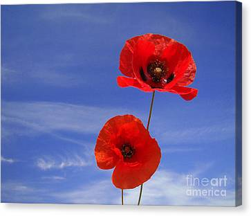 Poppies 02 Canvas Print by Giorgio Darrigo