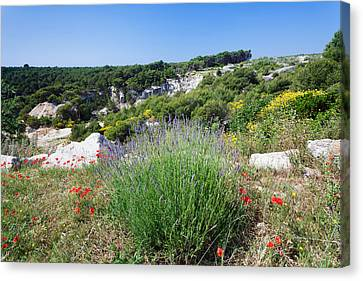 Poppies And Lavender In Bloom, Brac Canvas Print by Panoramic Images