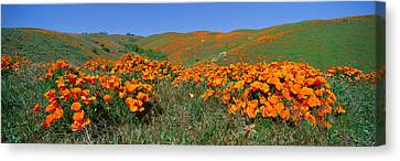 Poppies And Wildflowers, Antelope Canvas Print by Panoramic Images