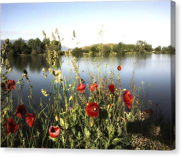 Poppies At Lake Canvas Print