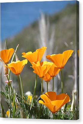 Poppies Canvas Print by Bev Conover