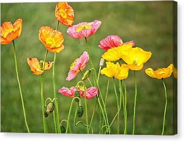Poppies Blooming Canvas Print by Joan Herwig