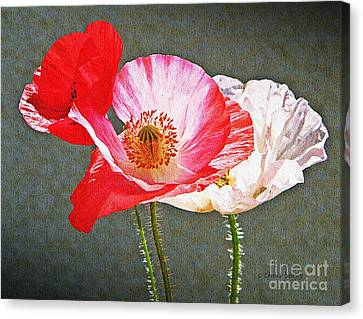 Poppies  Canvas Print by Chris Berry
