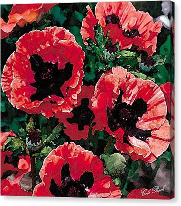 Poppies Canvas Print by Cole Black