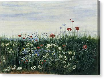 Poppies, Daisies And Other Flowers Canvas Print