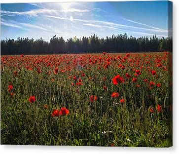 Canvas Print featuring the photograph Poppies Field Forever by Meir Ezrachi