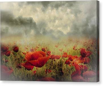 Poppies From Heaven - Vintage Canvas Print