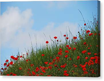 Poppies In A French Landscape Canvas Print