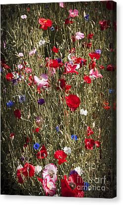 Poppies In Garden Canvas Print by Elena Elisseeva