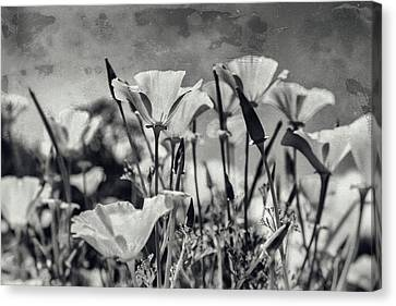 Poppies In Mono Canvas Print by Georgia Fowler