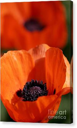 Canvas Print featuring the photograph Poppies In Sunlight by Lincoln Rogers