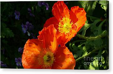 Poppies Canvas Print by Jeanne  Woods