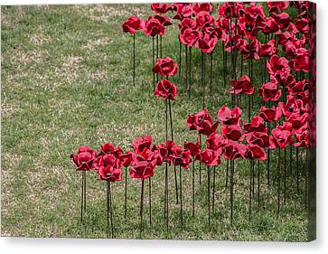 Poppies Canvas Print by Martin Newman