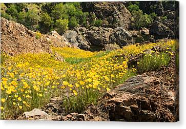 Poppies On The Stanislaus River Canvas Print by Matt Tilghman