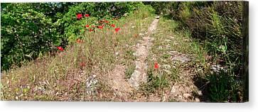 Poppies On The Way To Caseneuve Canvas Print