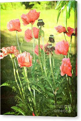 Poppies Canvas Print by Rosemary Aubut